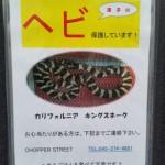 迷子のヘビ